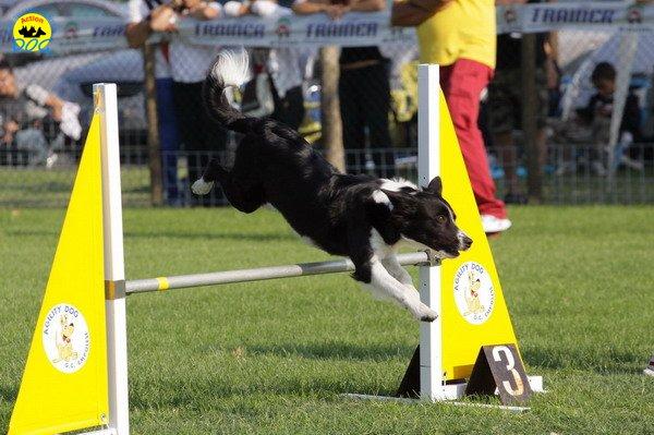 026-agilitydog-gpt-empoli-27set09