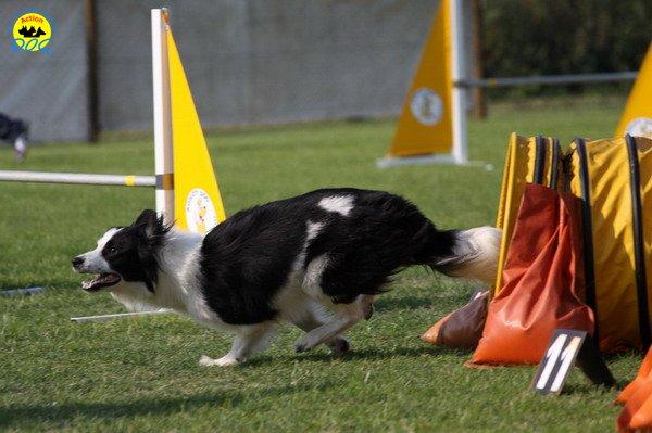 034-agilitydog-gpt-empoli-27set09
