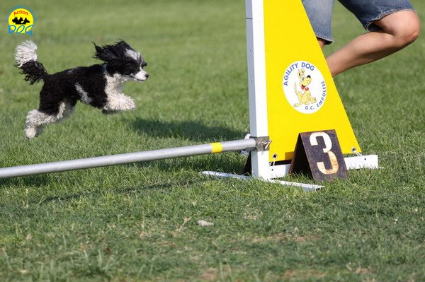 062-agilitydog-gpt-empoli-27set09