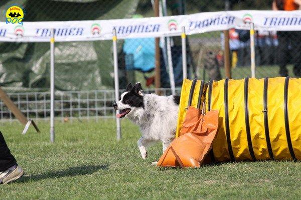 069-agilitydog-gpt-empoli-27set09
