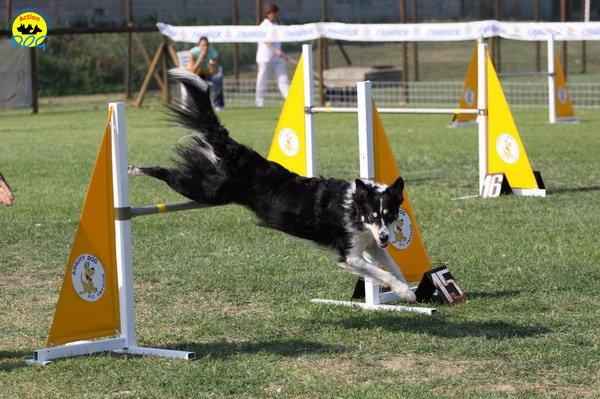 073-agilitydog-gpt-empoli-27set09