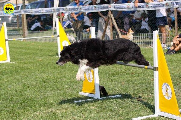 075-agilitydog-gpt-empoli-27set09