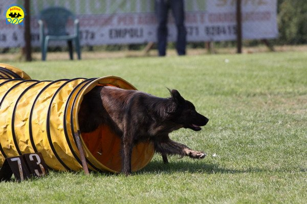 084-agilitydog-gpt-empoli-27set09