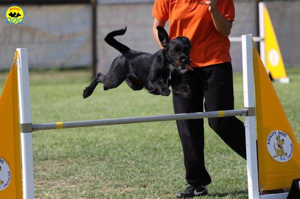 087-agilitydog-gpt-empoli-27set09