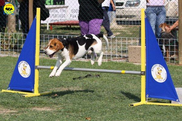 105-agilitydog-gpt-empoli-27set09