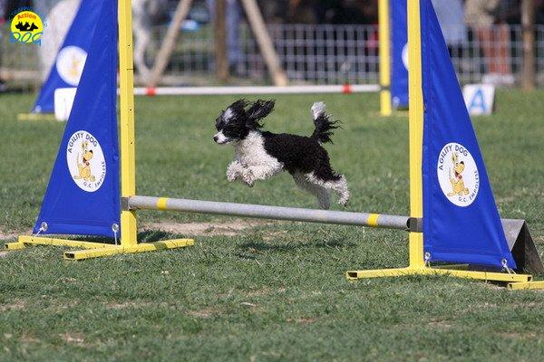 112-agilitydog-gpt-empoli-27set09