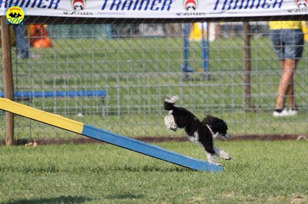 113-agilitydog-gpt-empoli-27set09