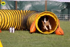 005-agilitydog-gpt-empoli-27set09