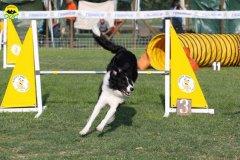 008-agilitydog-gpt-empoli-27set09