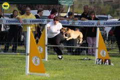 009-agilitydog-gpt-empoli-27set09