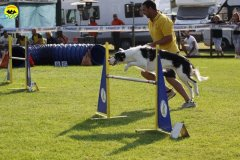 013-agilitydog-gpt-empoli-27set09