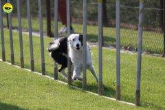 014-agilitydog-gpt-empoli-27set09