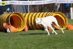 022-agilitydog-gpt-empoli-27set09