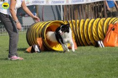 028-agilitydog-gpt-empoli-27set09