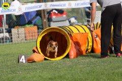040-agilitydog-gpt-empoli-27set09