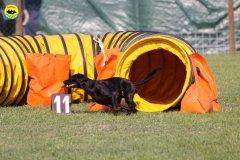 042-agilitydog-gpt-empoli-27set09
