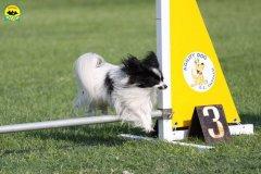 049-agilitydog-gpt-empoli-27set09