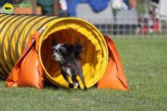 054-agilitydog-gpt-empoli-27set09