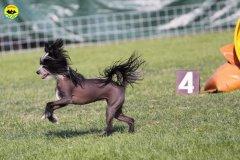 055-agilitydog-gpt-empoli-27set09