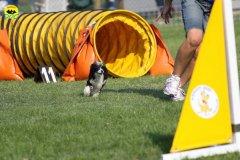 061-agilitydog-gpt-empoli-27set09