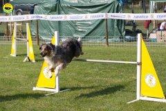 077-agilitydog-gpt-empoli-27set09