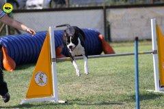 081-agilitydog-gpt-empoli-27set09