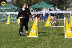 086-agilitydog-gpt-empoli-27set09