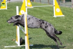 088-agilitydog-gpt-empoli-27set09