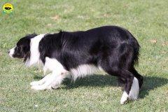 098-agilitydog-gpt-empoli-27set09