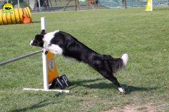 099-agilitydog-gpt-empoli-27set09