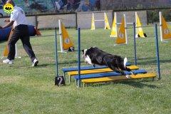 100-agilitydog-gpt-empoli-27set09
