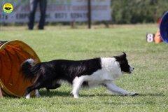 101-agilitydog-gpt-empoli-27set09