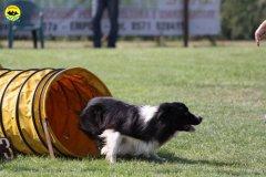 102-agilitydog-gpt-empoli-27set09