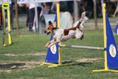103-agilitydog-gpt-empoli-27set09
