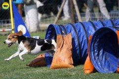 106-agilitydog-gpt-empoli-27set09