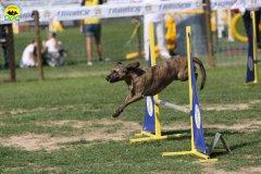 108-agilitydog-gpt-empoli-27set09