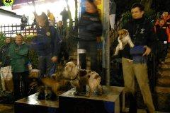03-gara-agility-perugia-marzo2011