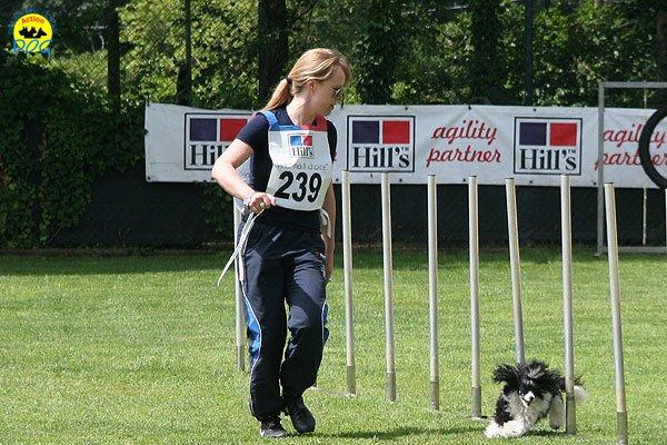 24-agility-dog-roma-29-05-2010