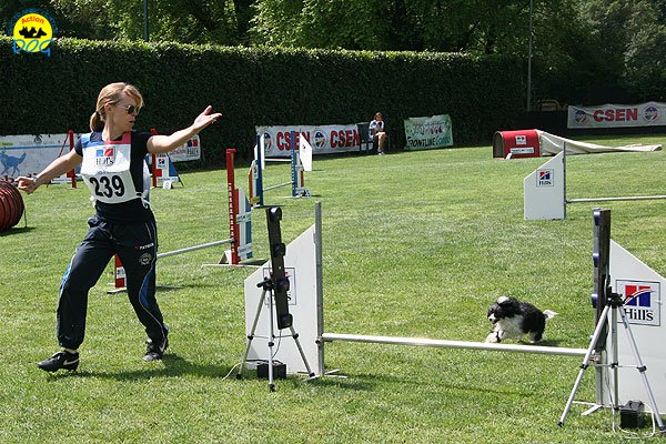 25-agility-dog-roma-29-05-2010