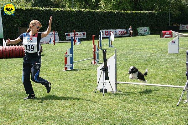 26-agility-dog-roma-29-05-2010