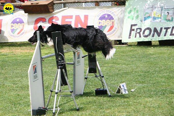 30-agility-dog-roma-29-05-2010