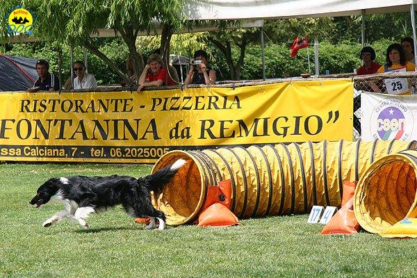 32-agility-dog-roma-29-05-2010