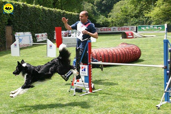 43-agility-dog-roma-29-05-2010