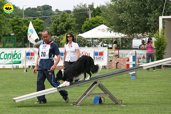 57-agility-dog-roma-29-05-2010