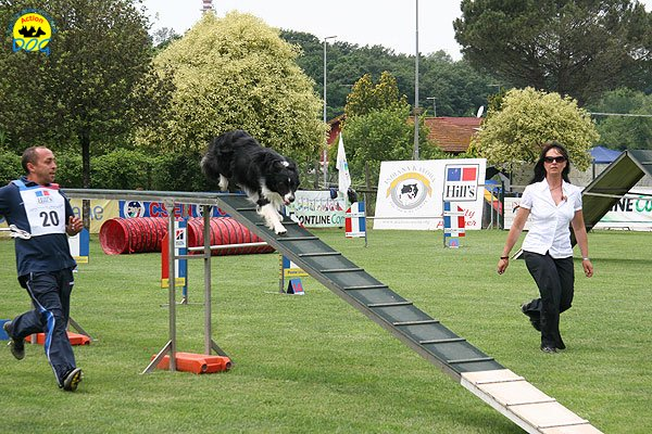 65-agility-dog-roma-29-05-2010