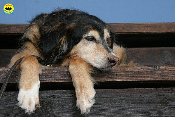 69-agility-dog-roma-29-05-2010