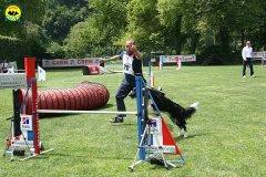 42-agility-dog-roma-29-05-2010