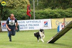 62-agility-dog-roma-29-05-2010
