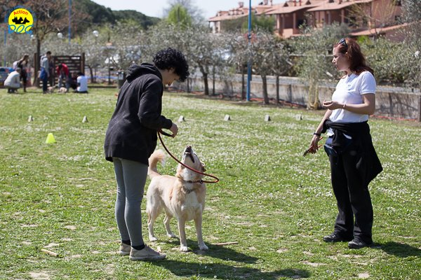 068 Open Day Action Dog 2015.jpg