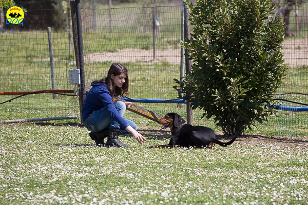 073 Open Day Action Dog 2015.jpg